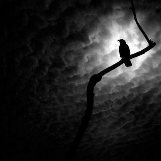 Corvus Corax 2018