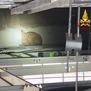 La gatta da sterilizzare scappa in clinica e si rifugia nel controsoffitto. Servono i  pompieri