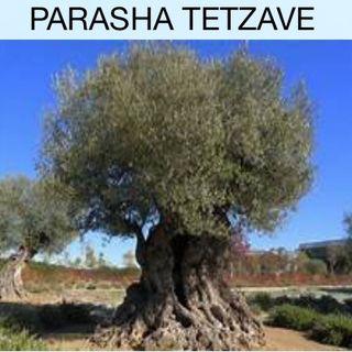 PARASHA 20 TETZAVE PRIMERA ALIYA EXODO 27:20 -28:12