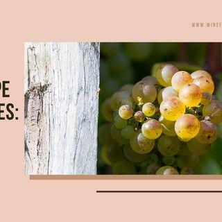 Ep 347: The Grape Miniseries -- Viognier