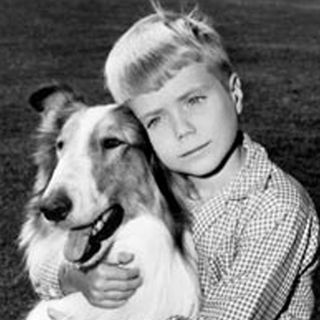 "Jon Provost who was Timmy in ""Lassie"" plus more TV Sitcoms as a Teen"