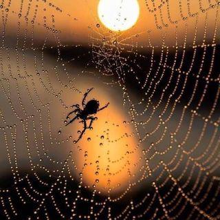 Buon inizio settimana in connessione al ragno! 🕷🕸💓