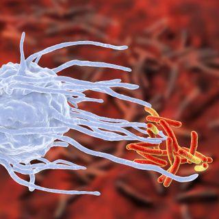 Zinco e sistema immunitario