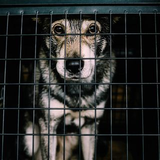 Woman admits to animal cruelty during hot weather