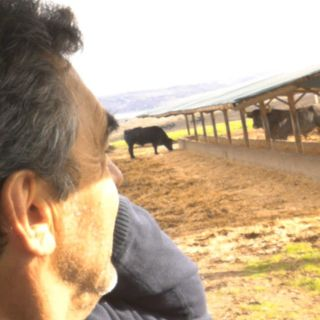 Crianza de un toro de lidia: Victorino Martín, ganadero taurino
