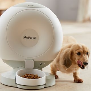 Wayne looks at some technology for the pets in your life