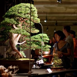 Can Bonsai Be High Art? UPDATED STORY