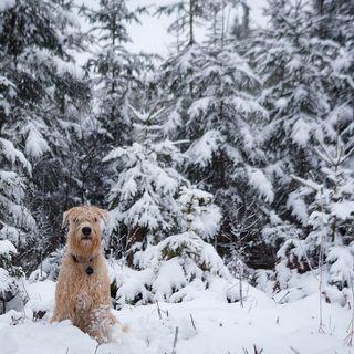 En época de frío también hay que cuidar a las mascotas