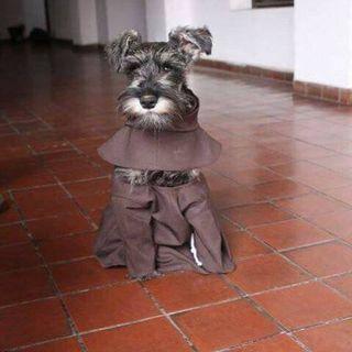 #141e5 Lo avete mai visto un cane monaco?