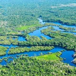 Amazzonia malata: rilascia più carbonio di quanto ne assorba
