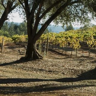 Ep 253: Stu Smith of Smith-Madrone Vineyards Talks About 48 Years in Napa Valley