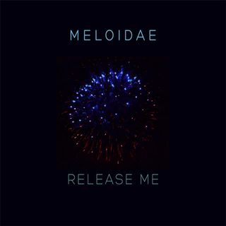 Meloidae Interview