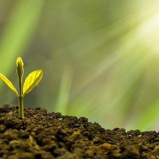 Recovery Plan, un'opportunità per far decollare la bioeconomia