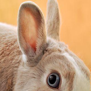 46 - Come si distingue un Coniglio da una Lepre? - Zoologia