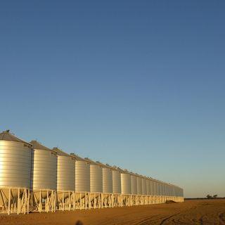 Sussidi agricoli, la FAO rivela: quelli dannosi valgono $470 miliardi