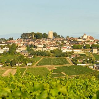 Ep 232: Loire's Central Vineyards (Sancerre, Pouilly Fume and more!)