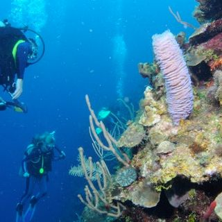 Scuba diving in the Bay Islands of Honduras