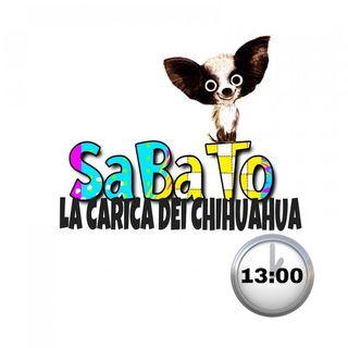 La Carica dei Chihuahua del 24/07/2021