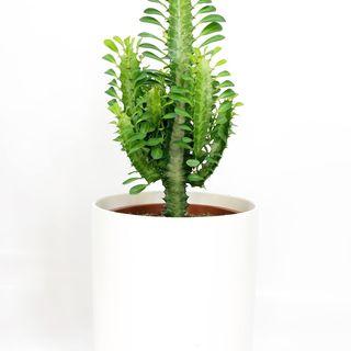 Order Potted Plants Online