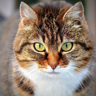 Como Entrenar A Tu Gato - Adiestramiento