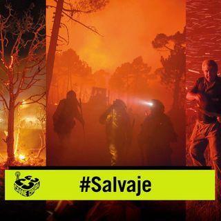 Incendios: el abandono prende la llama (SALVAJE - CARNE CRUDA #837)