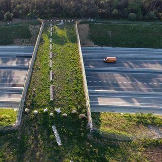 ¿Hacer o no un master? y pasos de fauna sobre autovías | Actualidad y Empleo Ambiental #17 18/6/19