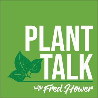 Tree Expert Chris Ahlum Talks About Tree Care and More.