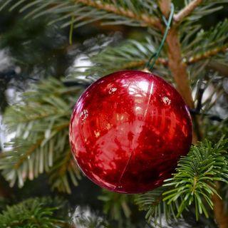 Tendenze: albero di Natale, di plastica o vero?