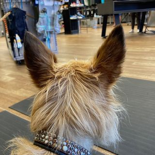 """""""Riley"""" the Shoe Store Dog"""