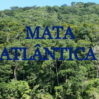 Cunhaporanga - Extinção de fauna e flora na Mata Atlântica
