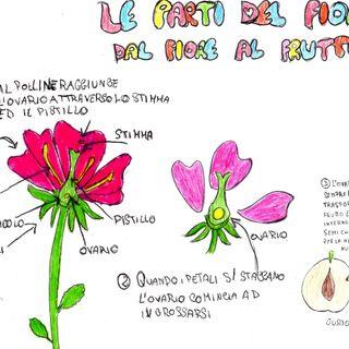 Il fiore di Viola Borrelli