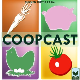0114 Piglets get names, pastured chickens and part time farming