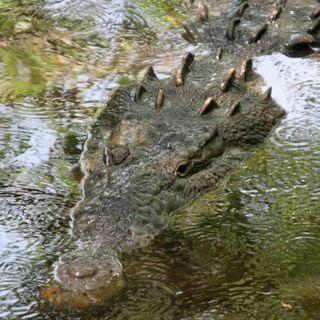 Talos - Gli antichi viaggi dei coccodrilli