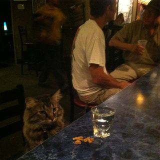 The Kitten Kong Show: Late Bar.