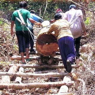 TimberLex dalla FAO un nuovo strumento contro i predatori di legname