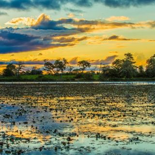 O Bioma Pantanal - Podcast