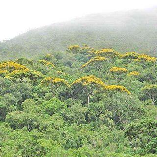 Extinção da fauna e da flora da Mata Atlântica