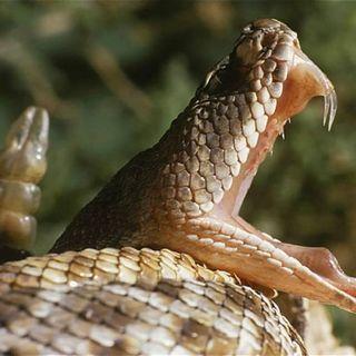 NUESTRO OXÍGENO Las serpientes - Dra. Clemencia Gómez Cabal