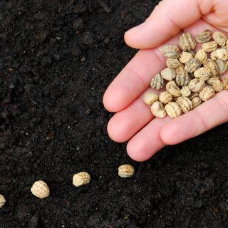 Un piccolo seme (Mc 4,26-34)