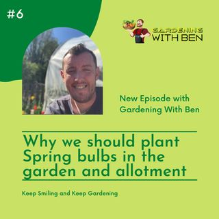 Why we should plant Spring bulbs in the garden and allotment