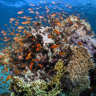 James Cook entdeckt das Great Barrier Reef (am 11..6.1770)