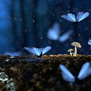 Il significato delle farfalle