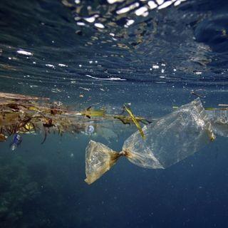 Endangered - La morte di plastica