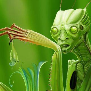 Alieni MANTIDI insettoidi