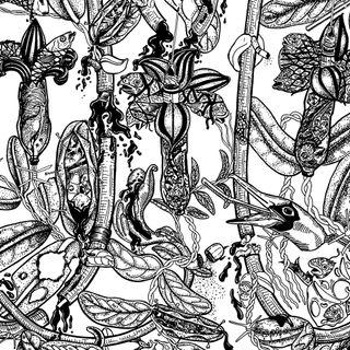 Peleas de canarios: ¿cultura o negocio ilegal?