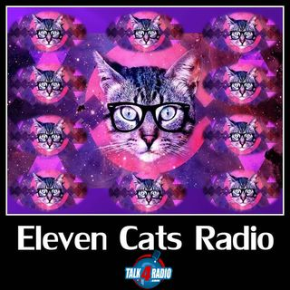 Fun Feline Facts & The Doggy Diva Show