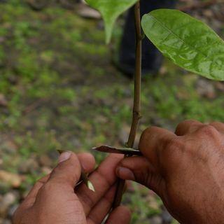 Propagación de material vegetal