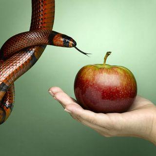 Temptation & Sin