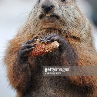 Groundhog Day - The TV Show