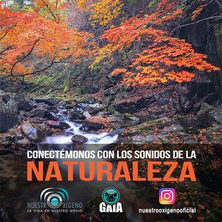 NUESTRO OXÍGENO Conectémonos con los sonidos de la naturaleza